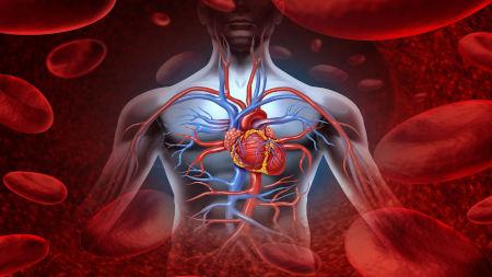 Hacer constantemente ejercicio cardiovascular es cuidar y fortalecer nuestro corazón y, por ende, todo nuestro cuerpo.