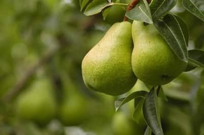 peras natural