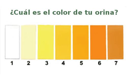 Gama de colores de orina, cuando esta en un nivel 1 a 2 es saludable.