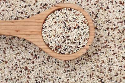 Engorda quinoa